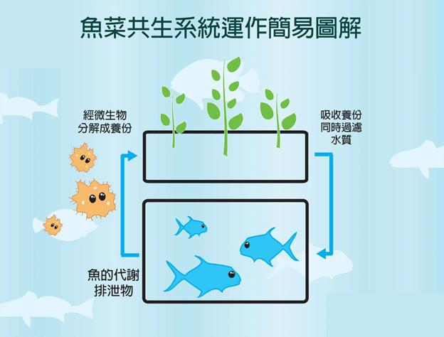 什麼是魚菜共生?