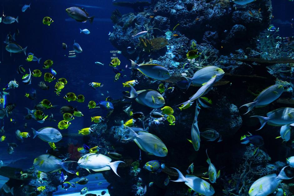 淡水魚和海水魚